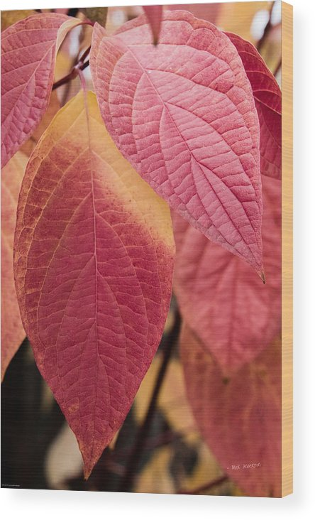 Shades Wood Print featuring the photograph Shades Of Autumn by Mick Anderson