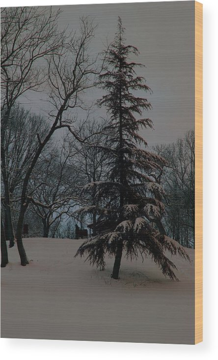 Tree Wood Print featuring the photograph Snow Day Hued by Carolyn Stagger Cokley