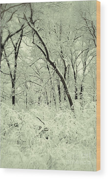 Snow Wood Print featuring the photograph Snowy Forest by Birgit Tyrrell