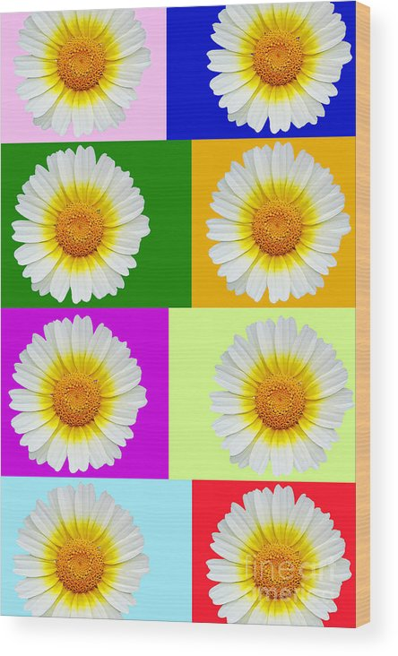 Collage Of Spring Flower Wood Print featuring the photograph Spring Collage by Kasia Bitner
