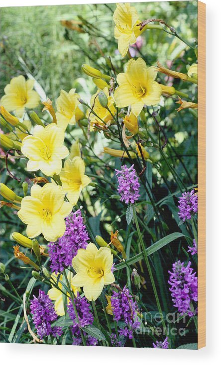 Flowers Wood Print featuring the photograph Spring Colors by Lauren Nicholson