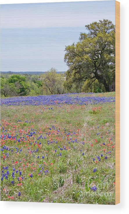Springtime Wood Print featuring the photograph Springtime In Texas by Gary Richards