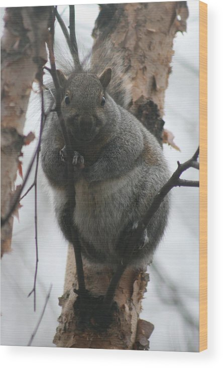 Gray Squirrel Wood Print featuring the photograph Spying On You by Earl ContehMorgan