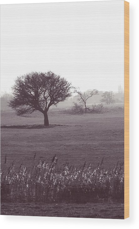 Tree In Field Wood Print featuring the photograph Stand Alone by Sharon Lisa Clarke