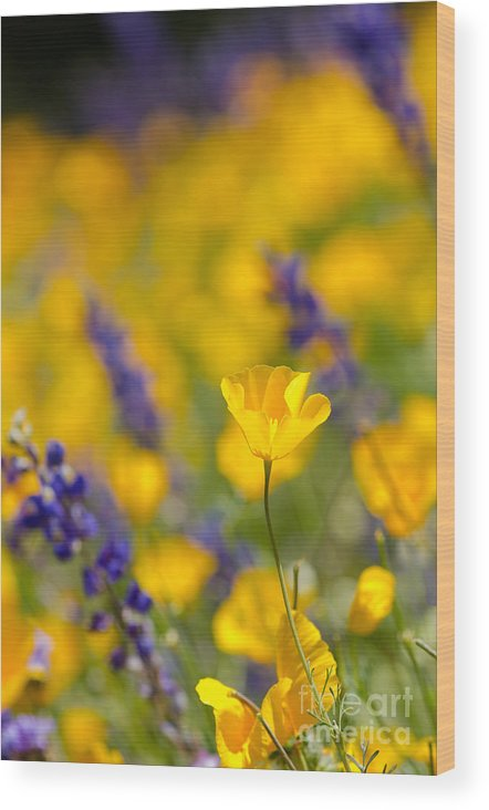 Flower Wood Print featuring the photograph Standing Out In A Crowd by Tamara Becker
