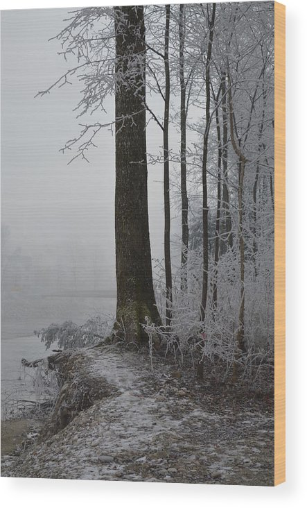 Landscape Wood Print featuring the photograph Steep And Frost by Felicia Tica