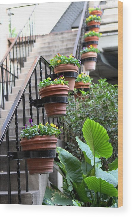 Abstract Wood Print featuring the photograph Steps Oh Plants by Sophal Benefield