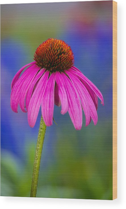 Flower Wood Print featuring the photograph Summer's Palette by Penny Meyers