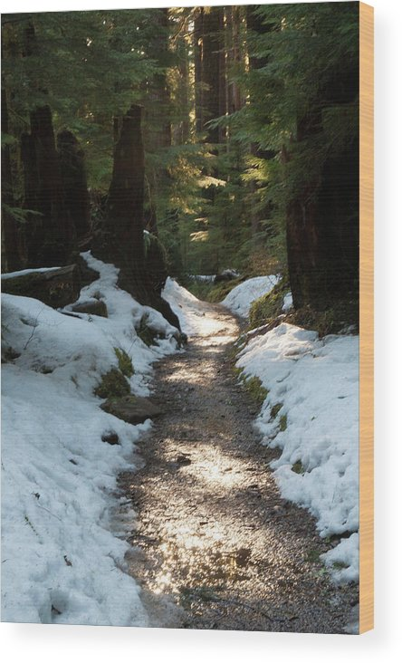 Art Wolfe Wood Print featuring the photograph Sun Lit Trail, Olympic National Park by Art Wolfe