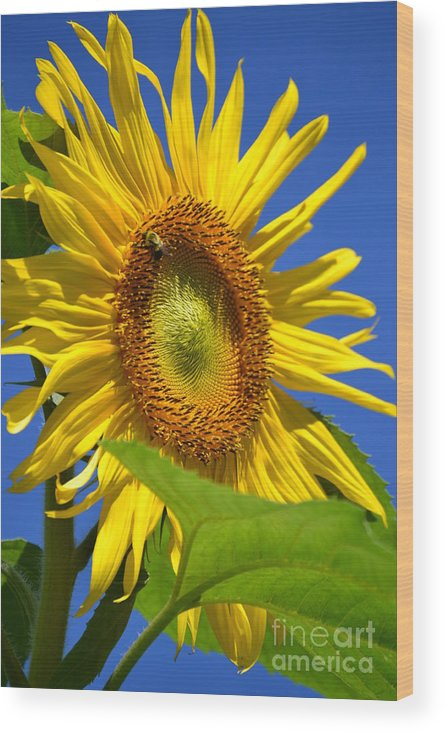 Bee Wood Print featuring the photograph Sunflower With Honeybee by Dennis Godin