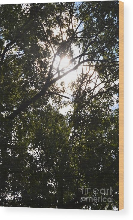Sun Wood Print featuring the photograph Sunlight Through Branches I by Dennis Godin