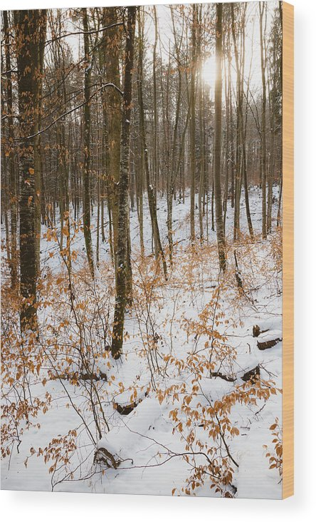 Winter Wood Print featuring the photograph Sunny Winter Day In The Forest Orange And Read Leaves On The Trees by Matthias Hauser