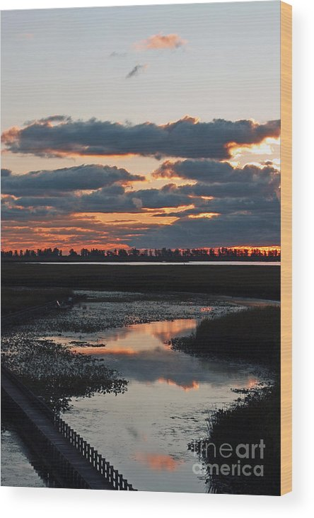 Sunrise Wood Print featuring the photograph Sunrise Over Point Pelee Provincial Park by Inspired Nature Photography Fine Art Photography
