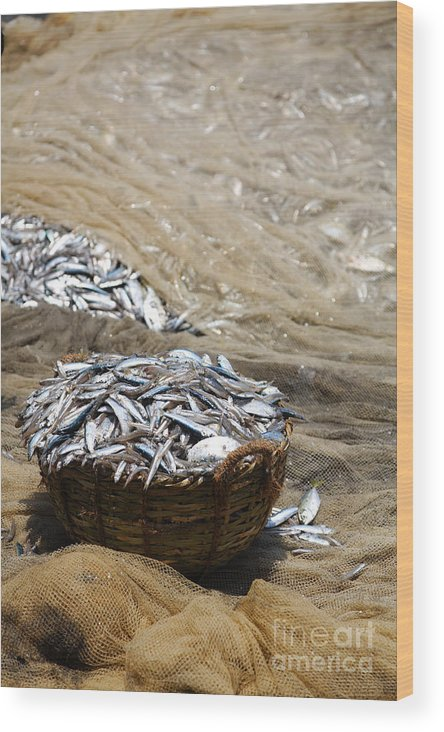 Basket Wood Print featuring the photograph The Catch by Robert Preston