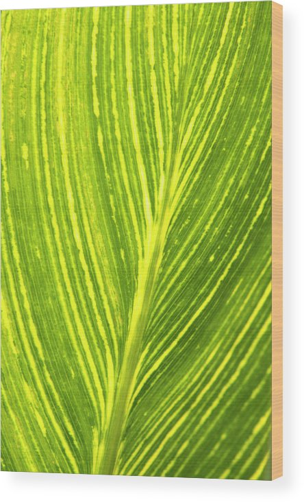 Beauty In Nature Wood Print featuring the photograph The Detail Of Plant Leaf, Salt Lake by Whit Richardson
