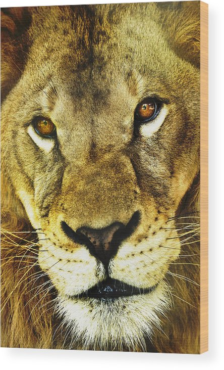 African Wood Print featuring the photograph The Eyes Have It by Steve Smith