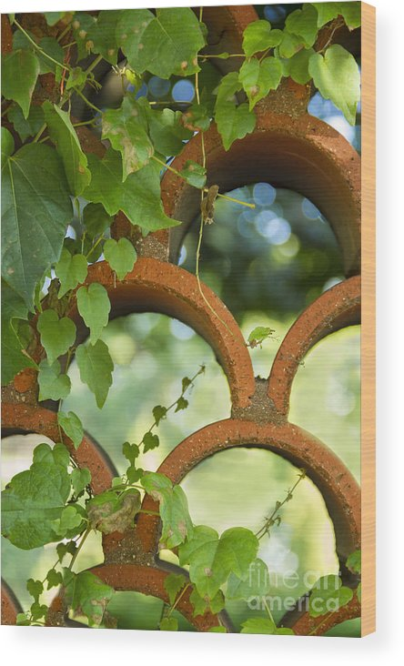 Ivy Wood Print featuring the photograph The Garden Wall by Margie Hurwich