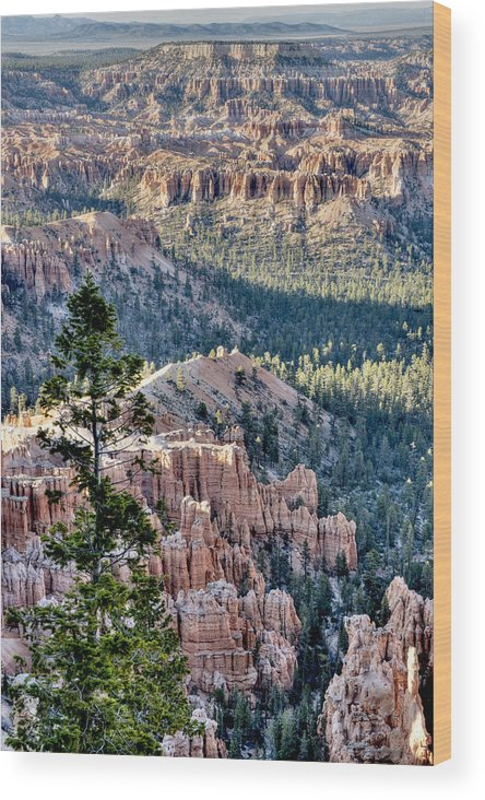 Mountains Wood Print featuring the photograph The Sentinel by Bryan Shane