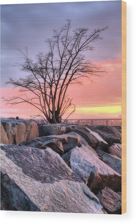 The Tree Wood Print featuring the photograph The Tree V by JC Findley