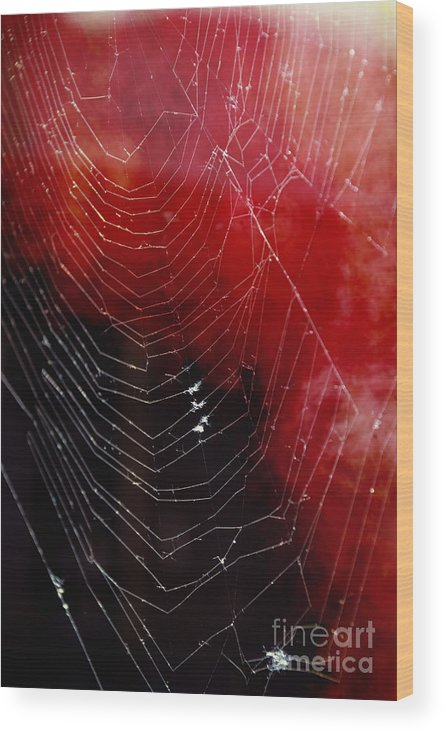 Web Wood Print featuring the photograph The Webs We Weave by Margie Hurwich
