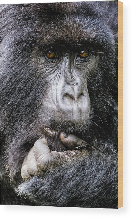 Africa Wood Print featuring the photograph Threatened By Poachers by Stephanie Brand