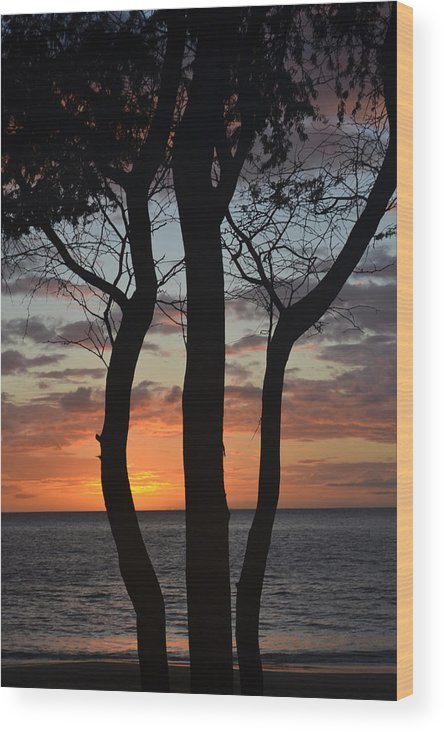 Maui Wood Print featuring the photograph Three Trees At Sunset by Evan Silver