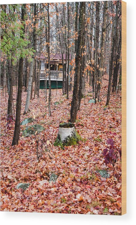 Camp Wood Print featuring the photograph Through The Trees by Rosemary Legge