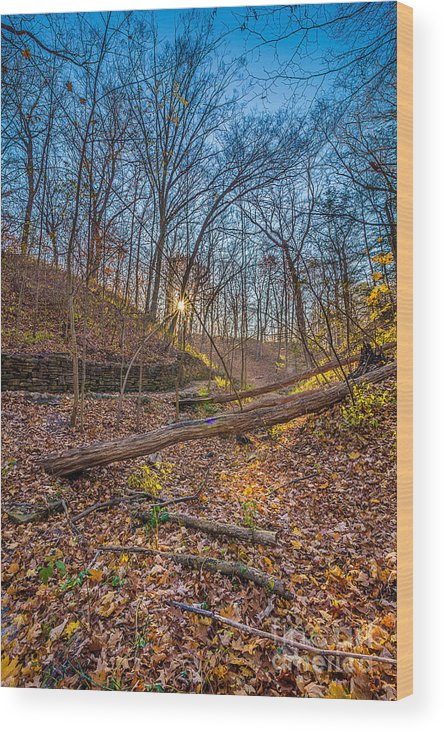 Autumn Wood Print featuring the photograph Thru The Woods by Andrew Slater