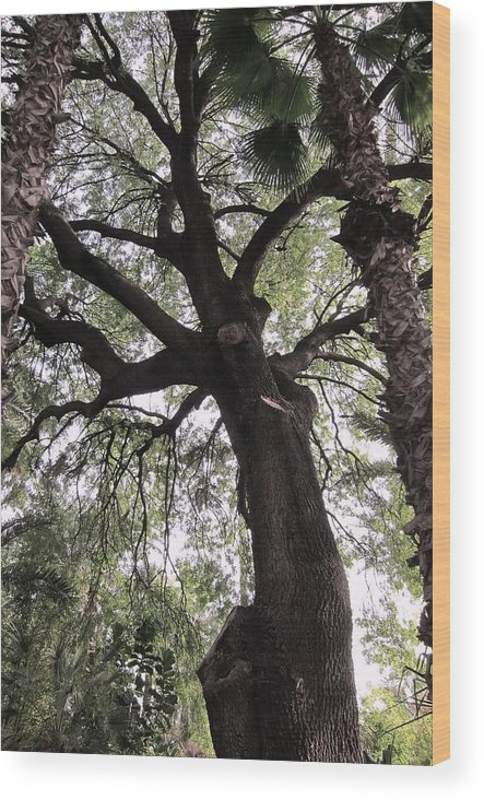 Plant Wood Print featuring the photograph Tree Of Life by Teresa Ruiz