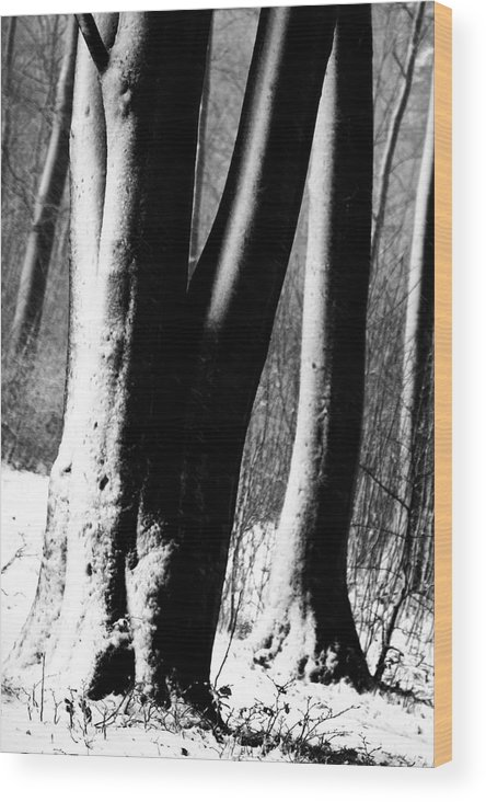 Forests Wood Print featuring the photograph Tree Trunks In Winter Under Snow In Denmark by Jean Schweitzer