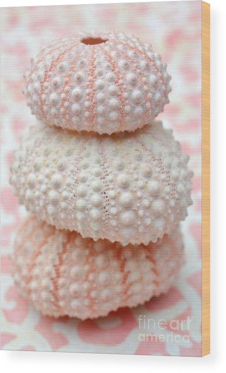 Three Sea Urchins Wood Print featuring the photograph Trio Of Pink Sea Urchins by Carol McGunagle
