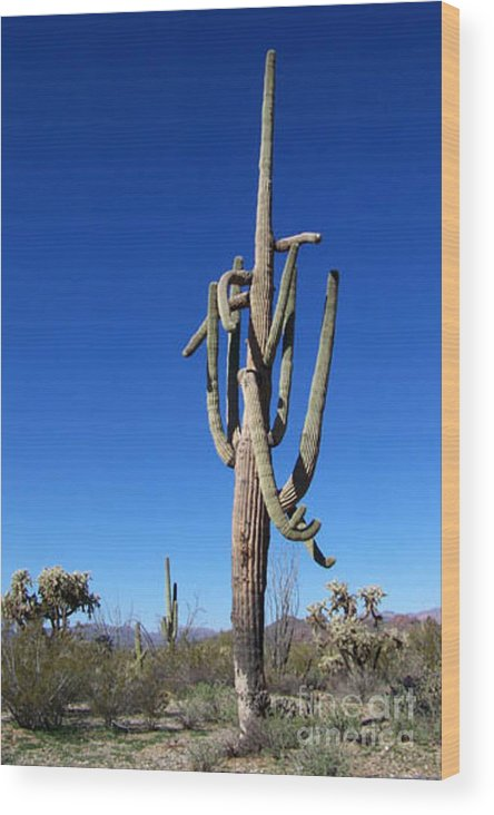 Sahuaro Wood Print featuring the photograph Twisted Sentinal by Kathy McClure