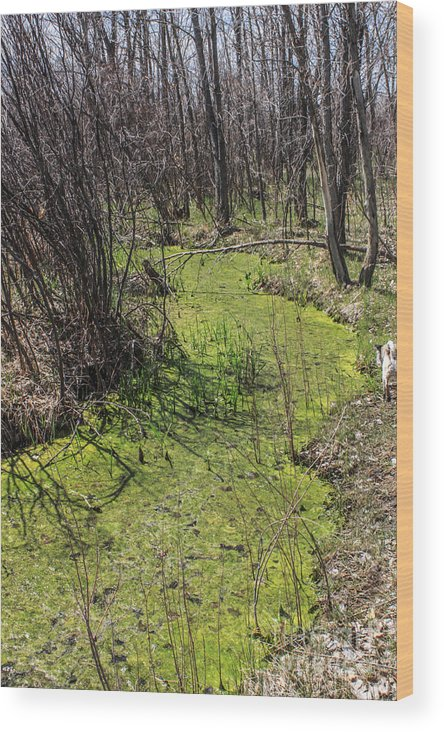 Creek Wood Print featuring the photograph Untouched Algae Takeover by Josh Scanlon