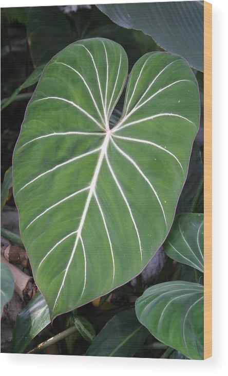 Washington Wood Print featuring the photograph Us Botanic Garden - 121212 by DC Photographer