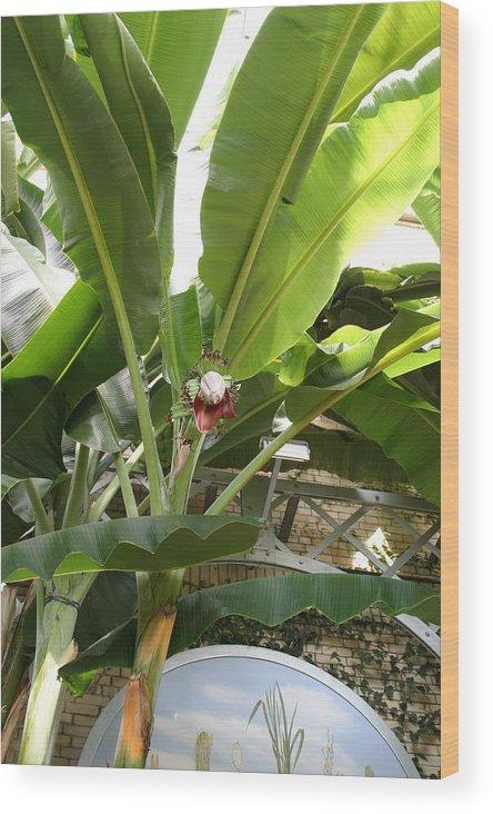Washington Wood Print featuring the photograph Us Botanic Garden - 12122 by DC Photographer
