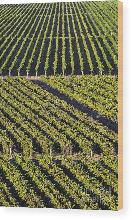 Napa Valley California Winery Wineries Grape Vine Vines Tree Trees Road Roads Street Streets Vertical Row Diagonal Rows Vineyard Vineyards Landscape Landscapes Wood Print featuring the photograph Vertical And Diagonal by Bob Phillips