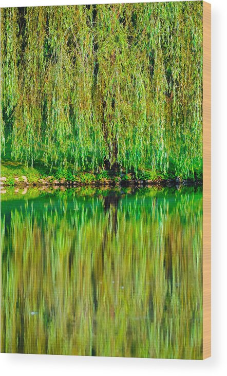 Background Wood Print featuring the photograph Weeping Willow by Brian Stevens