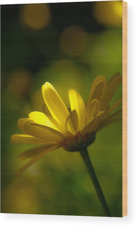 Spring Wood Print featuring the photograph Welcome Spring by Scott Hafer