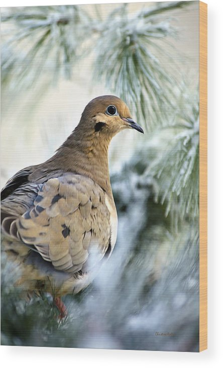 Dove Wood Print featuring the photograph Winter Bird Mourning Dove by Christina Rollo