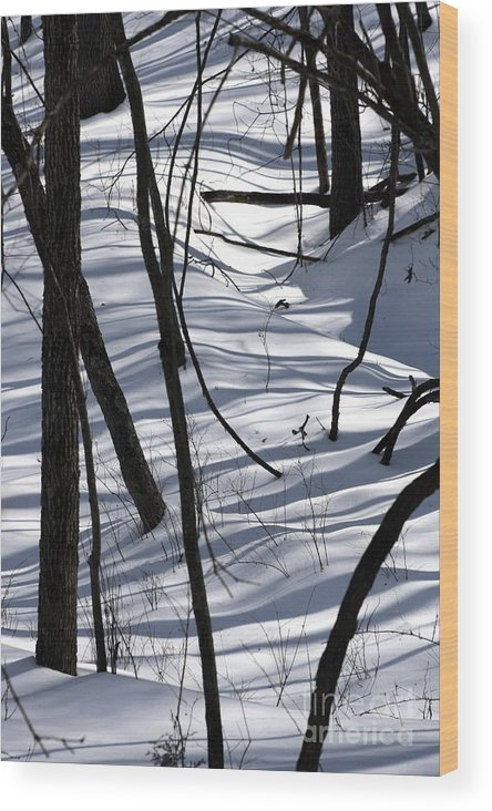 Winter Wood Print featuring the photograph Winter Hillside by Fred Sheridan