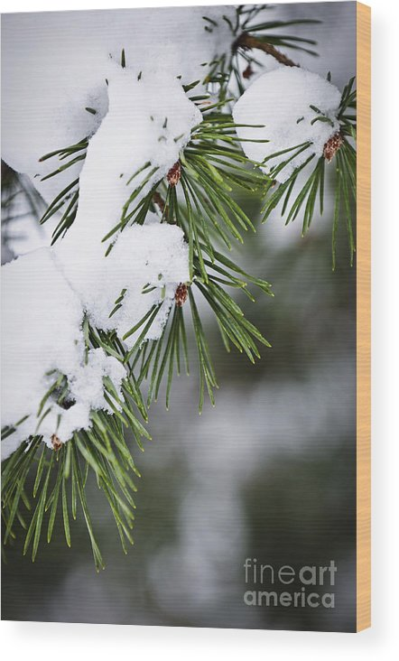 Winter Wood Print featuring the photograph Winter Pine Branches by Elena Elisseeva