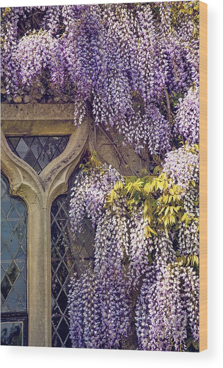 Anniversary Wood Print featuring the photograph Wisteria by Svetlana Sewell