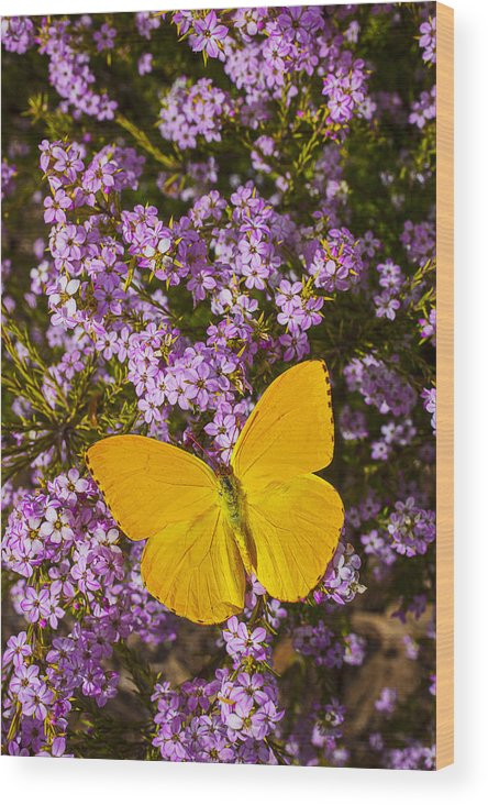Pink Wood Print featuring the photograph Yellow Butterfly On Pink Flowers by Garry Gay