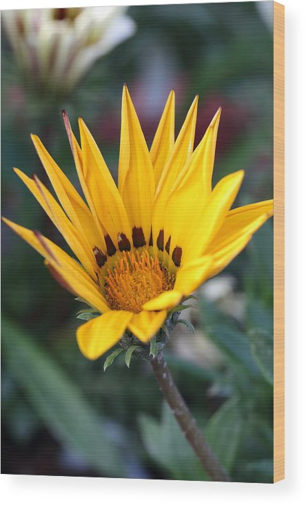Flower Wood Print featuring the photograph Yellow Flower by Shishir Bansal