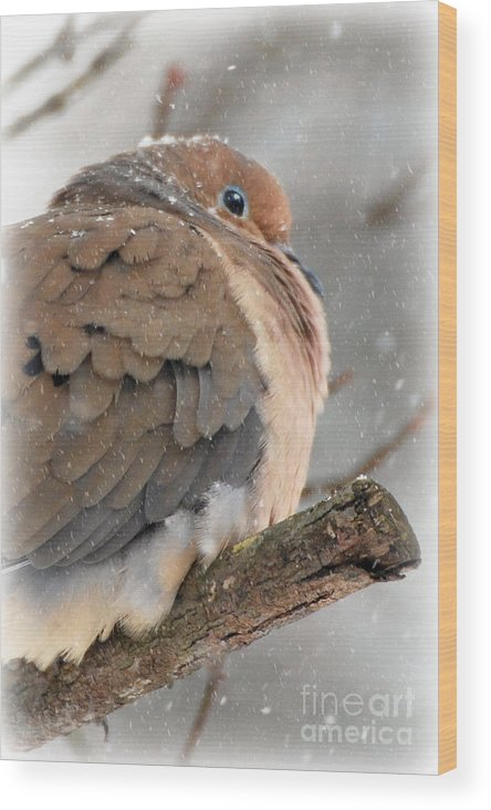 Tags: Snowy Mourning Doves Prints Photographs Wood Print featuring the photograph Snowy Mourning Dove by Lila Fisher-Wenzel