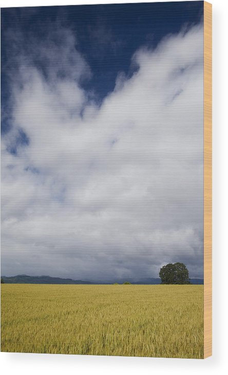 Farming Wood Print featuring the photograph Wheat Field And Storm by Karen Ulvestad
