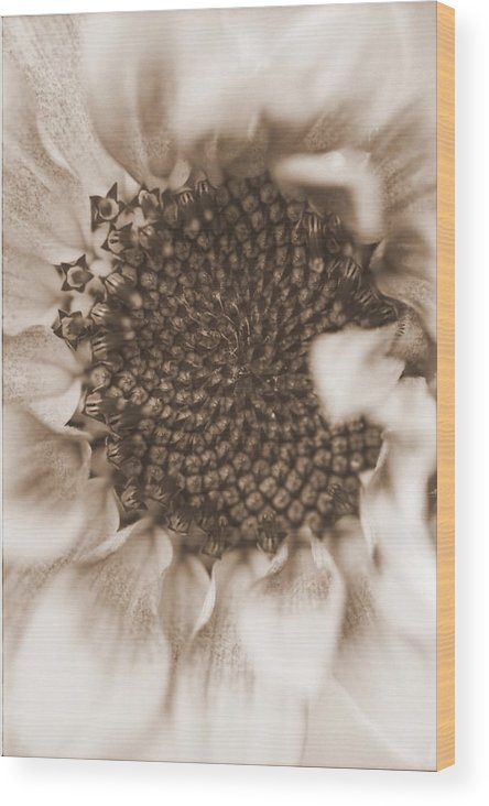 Flower Wood Print featuring the photograph Sunflower by Rick Rauzi