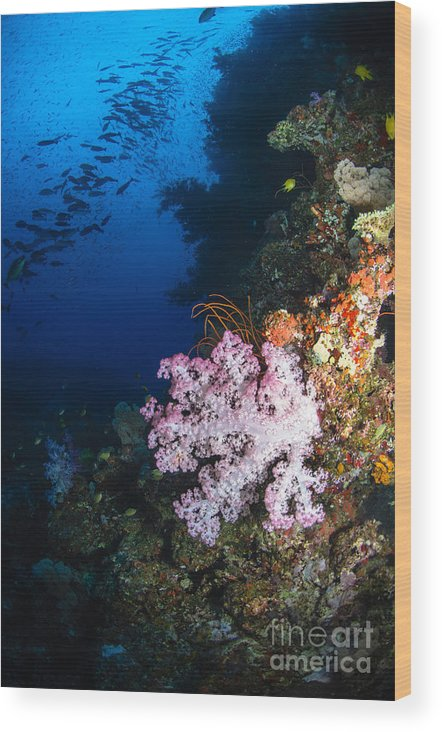 Fish Wood Print featuring the photograph Soft Coral Seascape, Fiji by Todd Winner