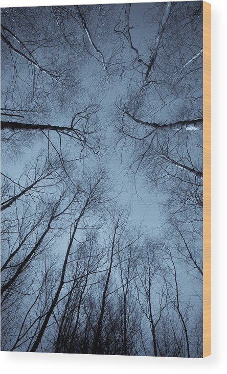 Tree Wood Print featuring the photograph Trees In Epping Forest by David Pyatt