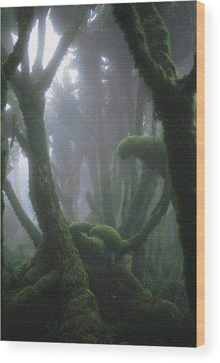 Africa Wood Print featuring the photograph A Fog-enshrouded Rain Forest In Rwandas by Michael Nichols